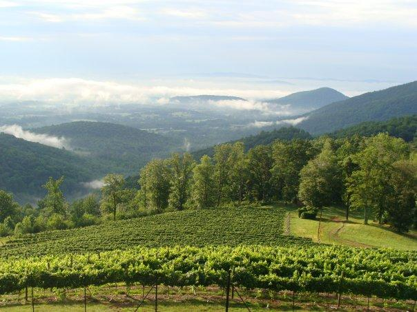 Vineyards with a View: Virginia Vineyard Month, Pt. 3
