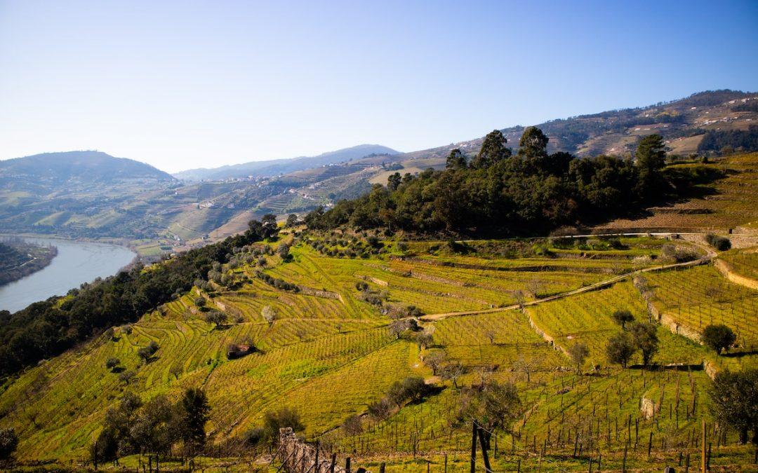 Best Wineries in the Douro Valley